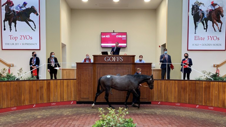 Lot 423: the brother to Yafta sells to Ed Sackville for £100,000