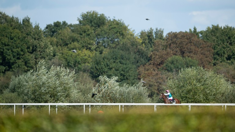 Enable and Frankie Dettori in the moments before the September Stakes