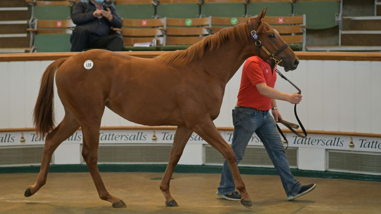 """The sale topper, about whom Derek Veitch said: """"it wouldn't have mattered what sale she was in, she'd have stood out"""""""
