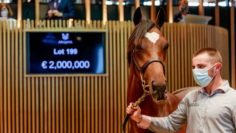 Lot 199: the Galileo brother to Magic Wand brings €2,000,000 in the Arqana ring