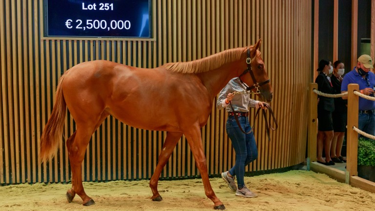 Lot 251: the Dubawi filly out of Starlet's Sister sells for €2.5 million