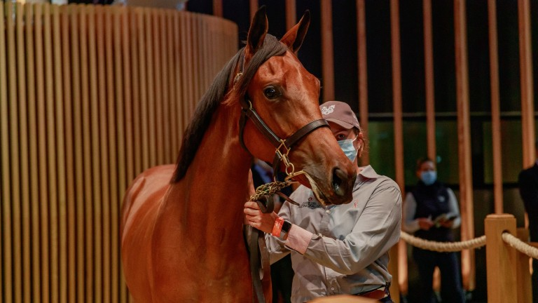 Lot 467, the Siyouni-Special Gift filly makes €290,000 on the final day of the Arqana Select Yearling Sale