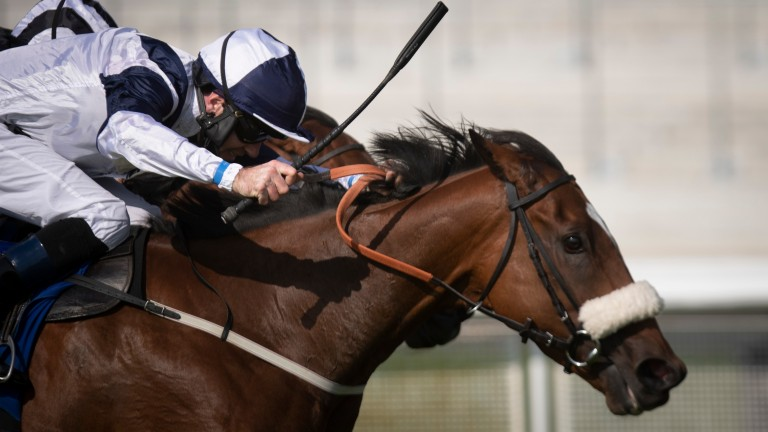 Glass Slippers sticks her head out to win the Group 1 Flying Five