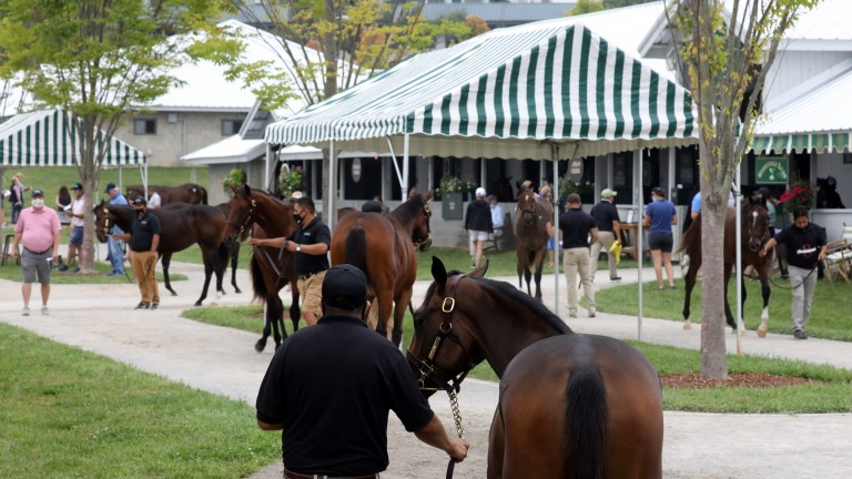 The scene at Keeneland on Sunday, day one of the September Yearling Sale