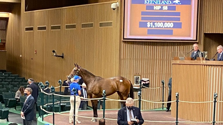 The Medaglia d'Oro filly who is a half-sister to outstanding young sire Constitution was bought by Mandy Pope for $1,1m