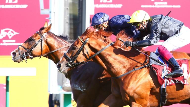 Anthony Van Dyck: narrowly denied Stradivarius in the Group 2 Prix Foy this season