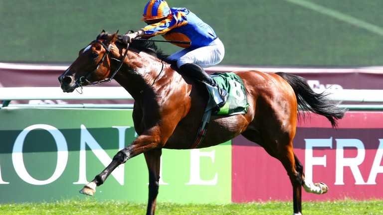 Mogul: set to be ridden by Ryan Moore in the Hong Kong Vase