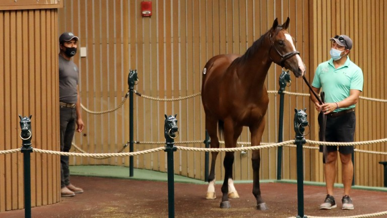 The filly by Into Mischief out of Special Me who went for $1.025m to Liz Crowe for an undisclosed client