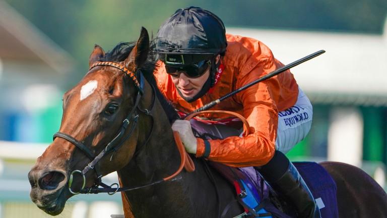 Kingmania: has a huge chance at big odds