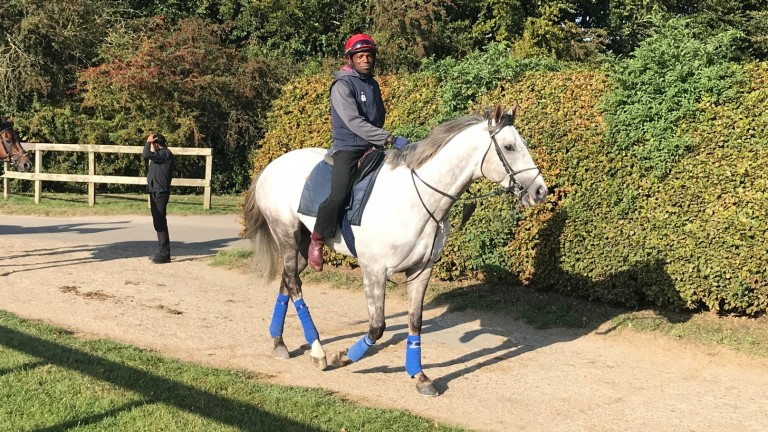 Logician heads to the Al Bahathri on Saturday morning