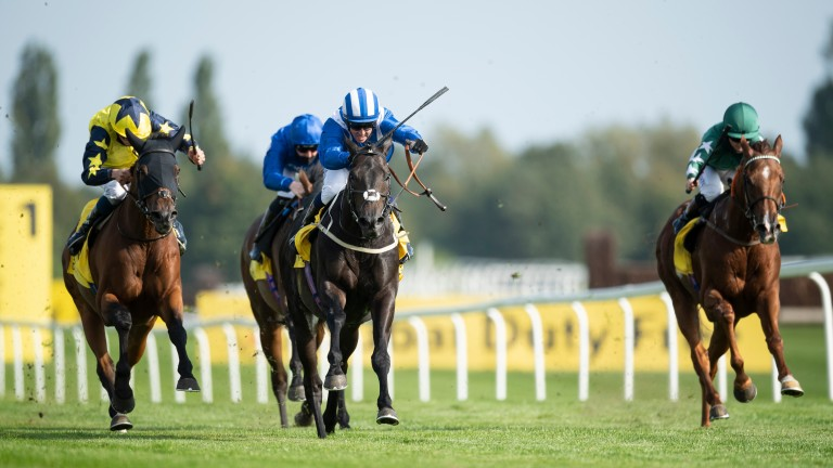 Elarqam: struck on his final outing at Newbury in September