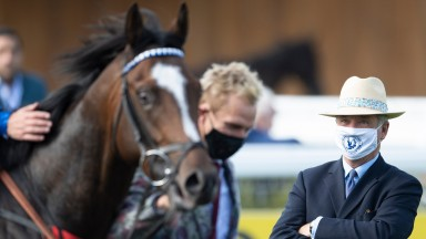 Alkumait: a homegrown hero for Whitsbury Manor Stud and trained locally by Marcus Tregoning
