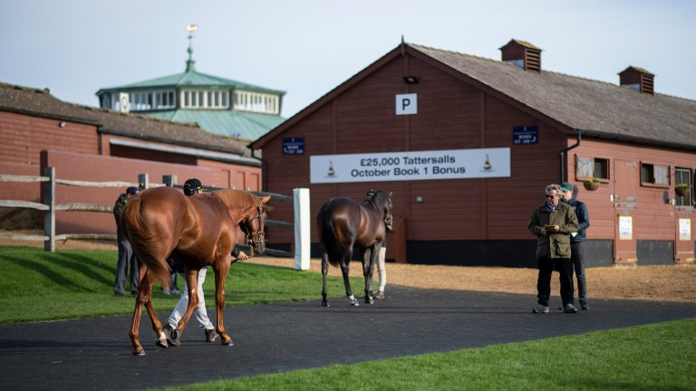 Tattersalls: the December Foal Sale will now start at 10am