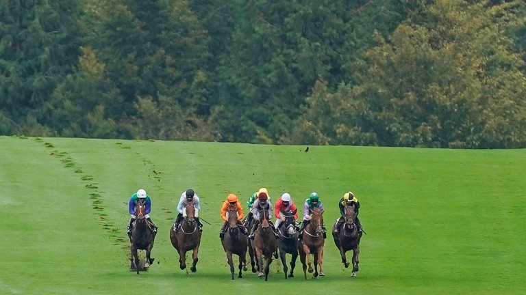 The Lamplighter (black cap) on his way to victory