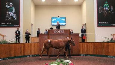 Henry Beeby brings the gavel down for a yearling at the Goffs Sportsman's Sale