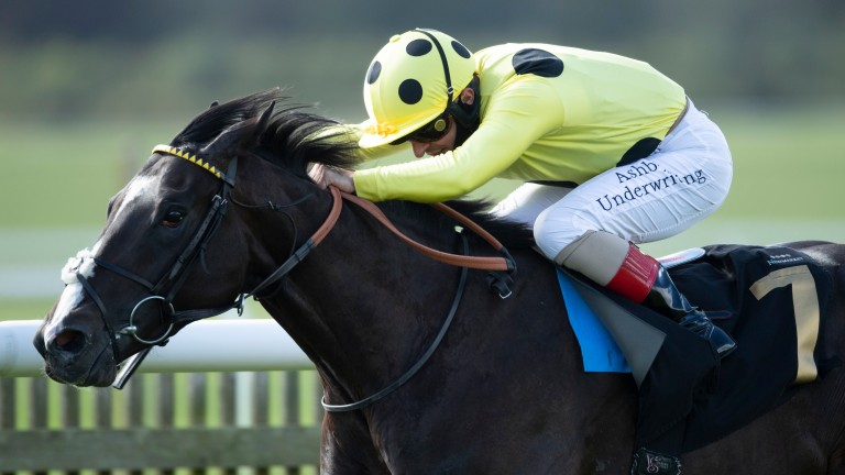 Can Roger Varian win another Derby trial, this time with Royal Champion (pictured)?