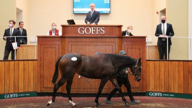 Lot 730: Henry Beeby knocks the Night Of Thunder filly down to Ross Doyle for £72,000
