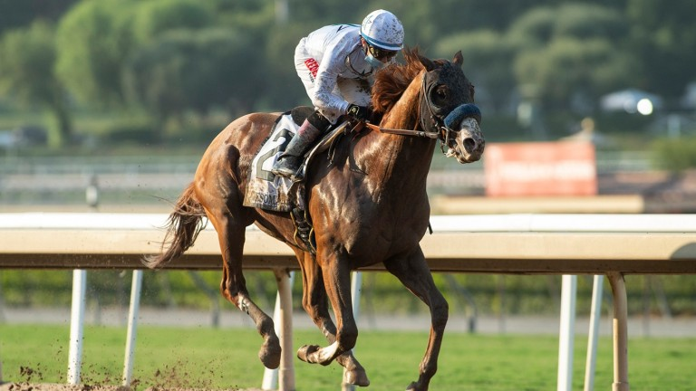 Improbable: one of three Breeders' Cup Classic runners for Bob Baffert