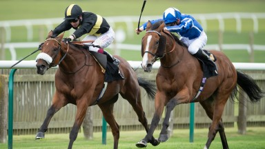 Ranch Hand (left): the Kingsclere Stud-bred gelding struck in Listed company at Newmarket