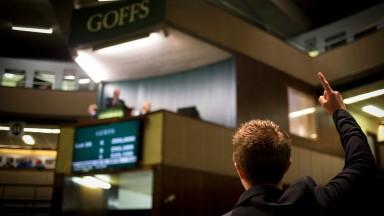 A spotter signals a bid Goffs sales complex Photo: Patrick McCann 27.09.2016