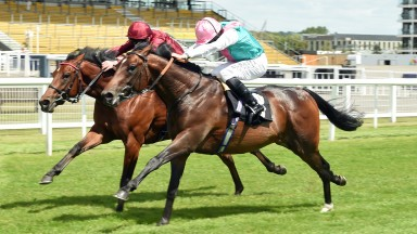 Maximal (nearside) will head to the Group 3 Autumn Stakes 18-7-20