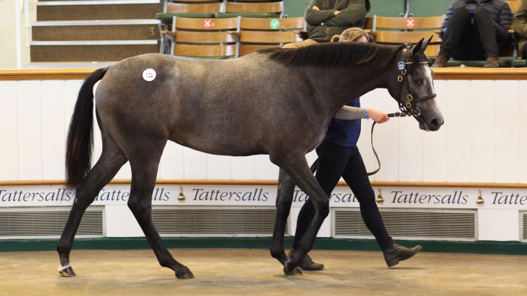 Camas Park Stud's Galileo filly, a sister to Classic winner Capri, sells for 850,000gns to McCalmont Bloodstock