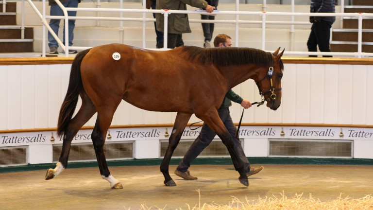 Floors Stud's Dubawi colt out of the stakes-placed Cushion makes 2,100,000gns to Anthony Stroud on behalf of Godolphin