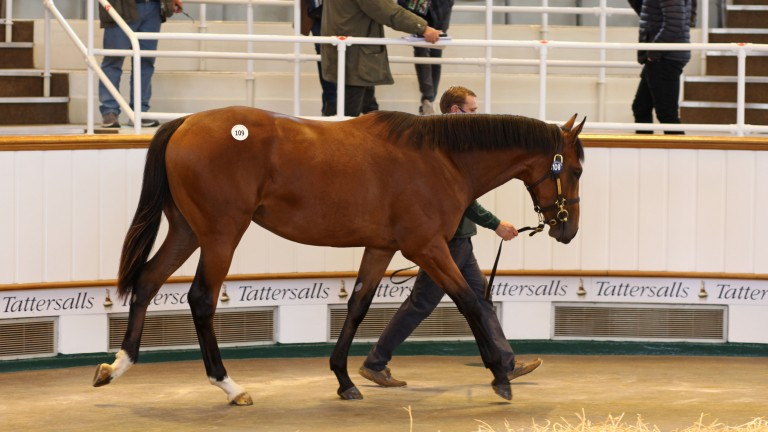 The Dubawi colt out of Cushion, since named Hafit, fetched 2,100,000gns at Tattersalls last October