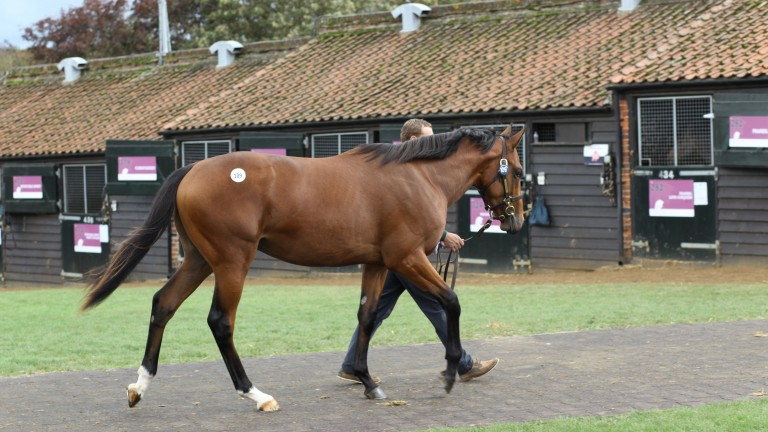 The Dubawi colt out of Cushion exits the ring after fetching 2,100,000gns