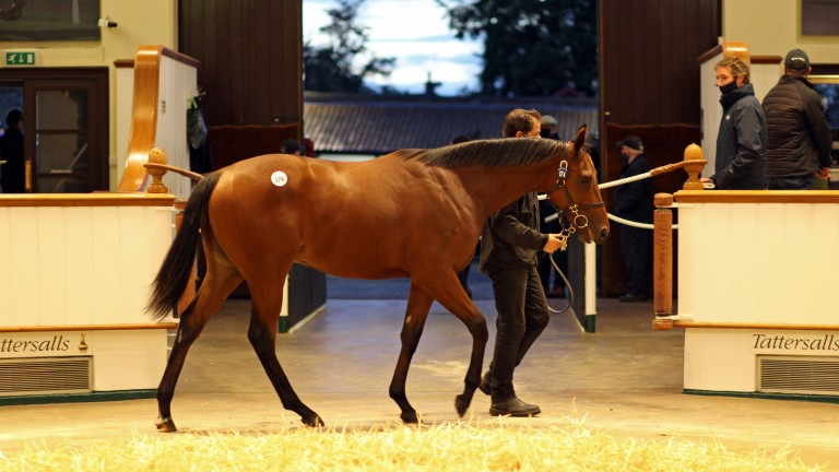 Lot 174: the Kingman half-brother to Galileo Gold sells to Oliver St Lawrence for 2,700,000gns