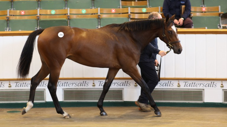 Lot 374: the Galileo filly out of Prize Exhibit in the Park Paddocks sales ring