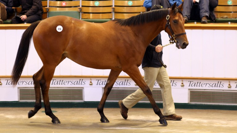 Lot 436, the Galileo filly out of Shastye realises 3,400,000gns to MV Magnier on the third day of Tattersalls Book 1