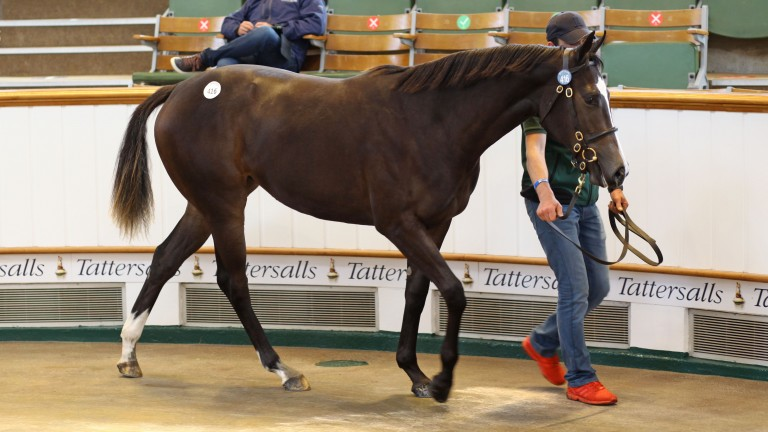 Lot 416, Lynn Lodge Stud's Kingman filly out of the Dream Ahead mare Sante, is knocked down for 1,450,000gns to Anthony Stroud on behalf of Godolphin
