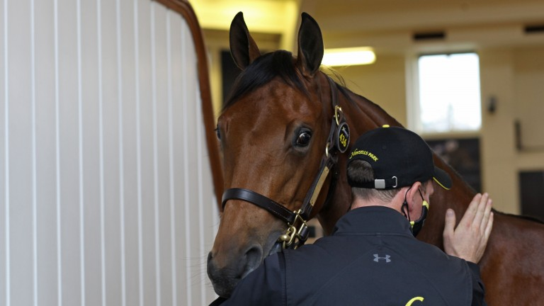 The sales-topping Galileo filly gets a reassuring pat as she exits the Park Paddocks ring