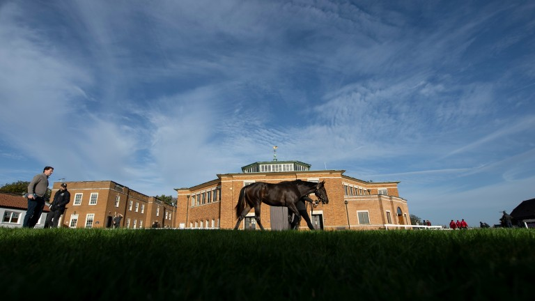 Tattersalls: concluded with Book 4 of the October Yearling Sale