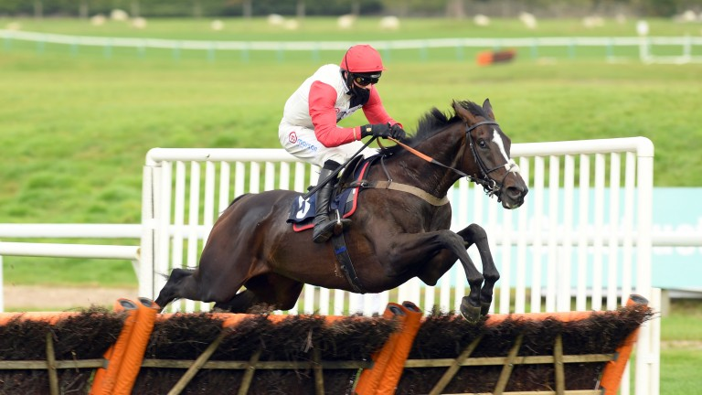 Thyme White: has been supported in the Coral Scottish Champion Hurdle