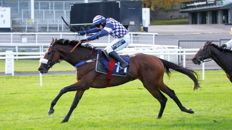 Racing post trophy betting line angola sports betting