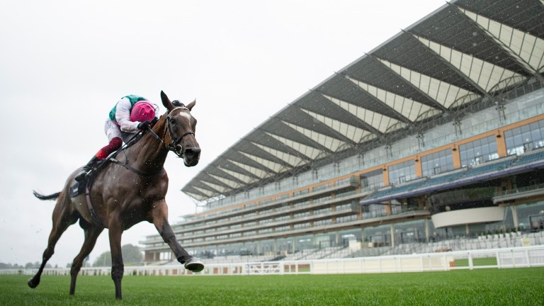 Enable: one of many Khalid Abdullah-owned superstars to grace the turf
