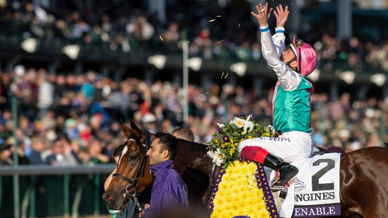 Queen of the turf: Enable returns victorious after beating Magical in the Breeders' Cup Turf