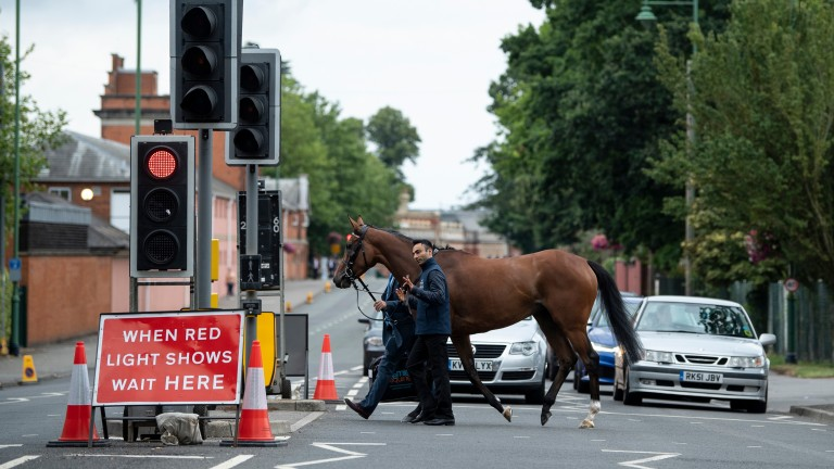 Stopping traffic: Enable crosses Ascot High Street en route to success in the King George