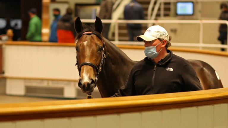 Lot 767: the 390,000gns Dark Angel filly in the Park Paddocks ring