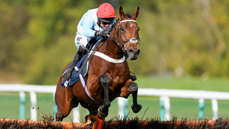 Vegas Blue: stands out among the breeding stock on offer