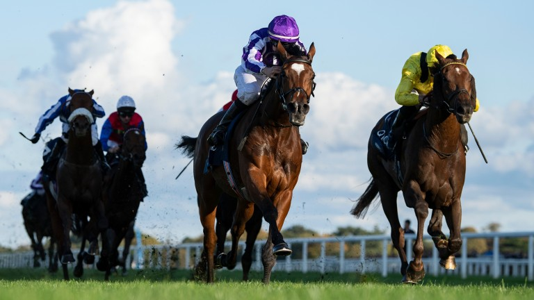 Magical will bid for back-to-back wins in Saturday's Champion Stakes