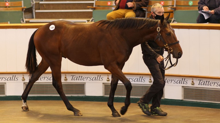 Lot 828, Baroda Stud's Bated Breath colt realises 260,000gns to Anthony Stroud