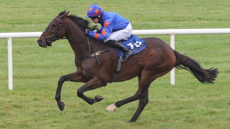 Dreal Deal: has won his last six starts