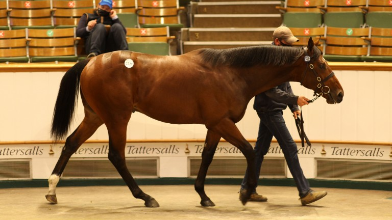 Lot 1,323: the session-topping Starspangledbanner brings 360,000gns from Anthony Stroud