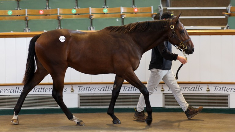 Lot 1,108: the Oasis Dream colt from Newsells Park Stud sells to Juddmonte for 310,000gns