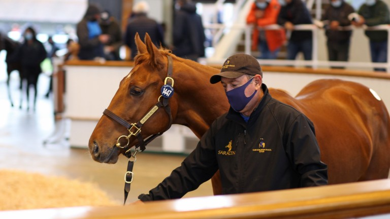 Lot 1,447: the Farhh colt out of Fair Daughter fetches 130,000gns from Stroud Coleman Bloodstock