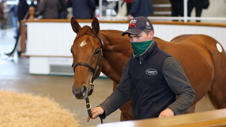 Lot 1,367: the Mehmas colt out of Araajmh goes to Tom Goff for 130,000gns