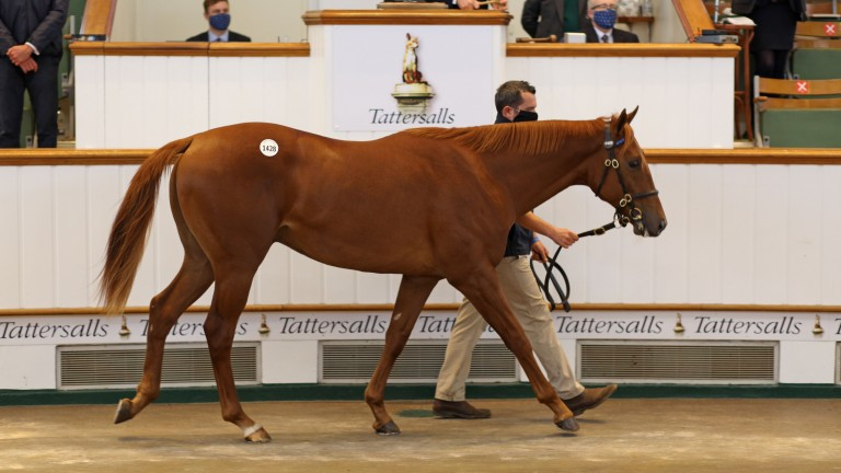 Lot 1,428: the Night Of Thunder colt bought by Grove Stud for 130,000gns